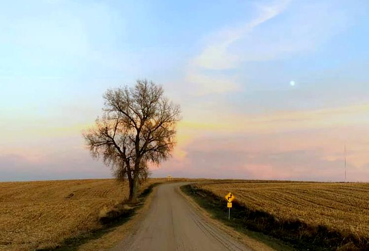 tree in the road