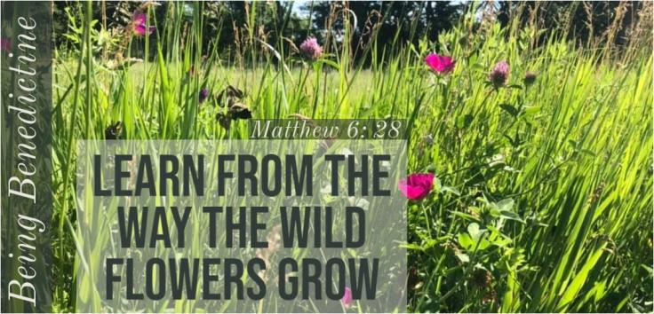 wild flowers grow